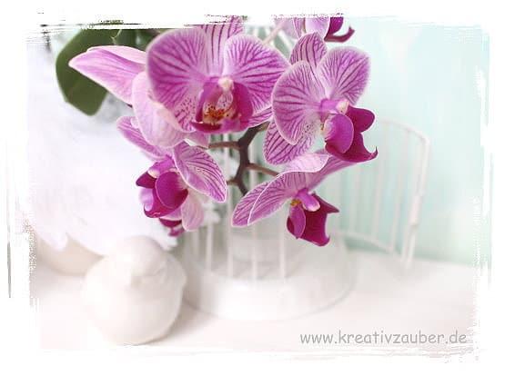 vintage-orchidee