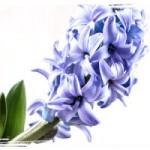 Zauberhafte Grüße zum Frühlingsanfang