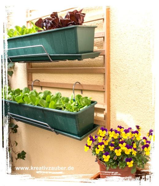 Salat pflanzen garantiert schneckenfrei for Garten idee