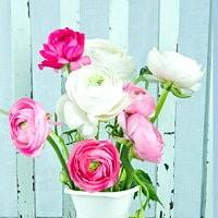 e-cards zu Muttertag und für alle Blumenliebhaber