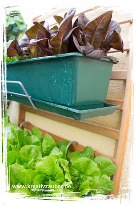 salat pflanzen garantiert schneckenfrei kreativ zauber. Black Bedroom Furniture Sets. Home Design Ideas