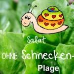 Salat pflanzen – garantiert schneckenfrei !!