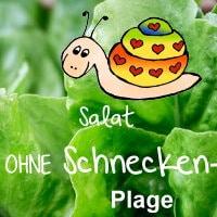 salat-pflanzen-vorschau