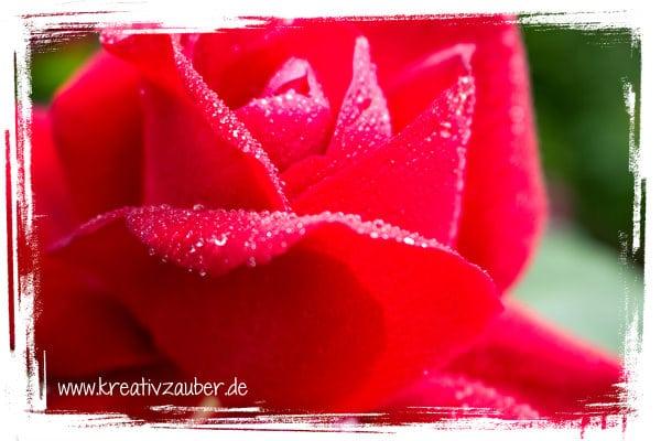 rosenkarte