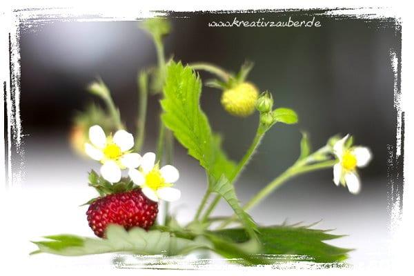 erdbeer-marmelade