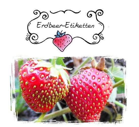 vorlagen etiketten erdbeere